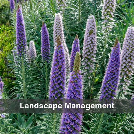 WW-LandscapeManagement